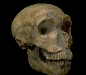neanderthal-4