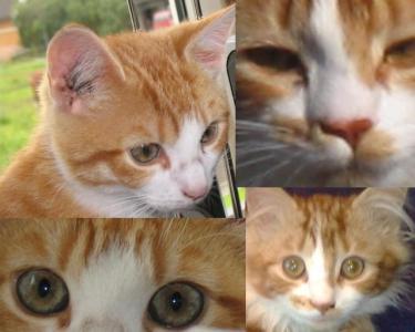 Kattepusene 2009