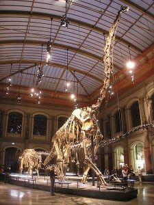 450px-Naturkundemuseum_Brachiosaurus_brancai