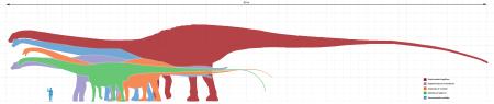 Longest_dinosaurs1